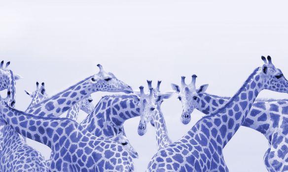 giraffe-neck-109075314